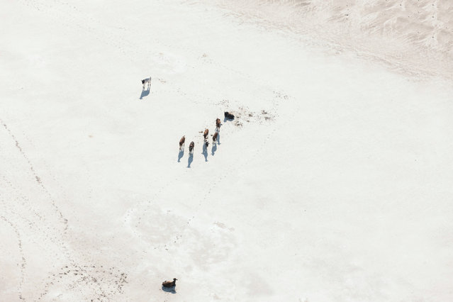 Botswana By Zack Seckler