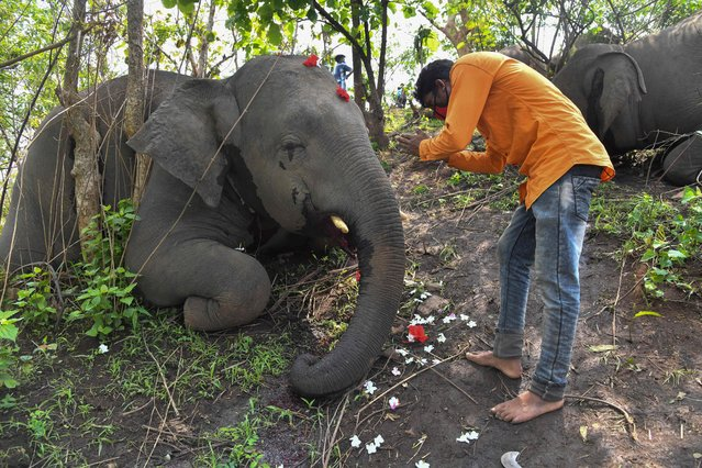 A villager offers prayer to a dead body of an elephant, which is killed by lightning at atop of Bamuni hill in Assam's Nagaon district, on May 14, 2021. 18 wild elephants were found dead atop Bamuni Hills in Assam's Nagaon district today after lightning struck them during the showers in the area on May 12, 2021. At least 18 elephants are suspected to have been killed by lightning in northeastern India, officials said on May 13 as they launched a probe into the incident. (Photo by Biju Boro/AFP Photo)