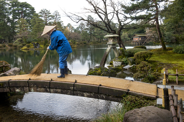 A groundskeeper uses a bamboo broom at Kasumigaike Pond at Kenrokuen Garden in Kanazawa, Japan on January 12, 2016. The japanese garden, located next to Kanazawa Castle, encompasses over 28 acres in downtown Kanazawa. With two ponds, rolling hills with streams and bridges, is considered a strolling-style landscape garden. It's regarded as one of the top three most beautiful gardens in Japan. (Photo by Linda Davidson/The Washington Post)