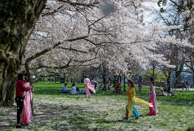 Tourists enjoy the warm weather near fully blossomed trees in central Dresden, Germany, 06 April 2019. Meteorologists predict sunny weather with temperatures around 19 degrees Celsius in the next days in Saxony. (Photo by Filip Singer/EPA/EFE)