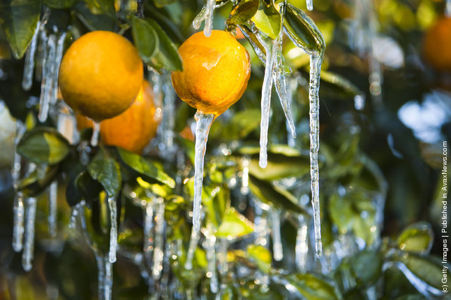Ice And Oranges
