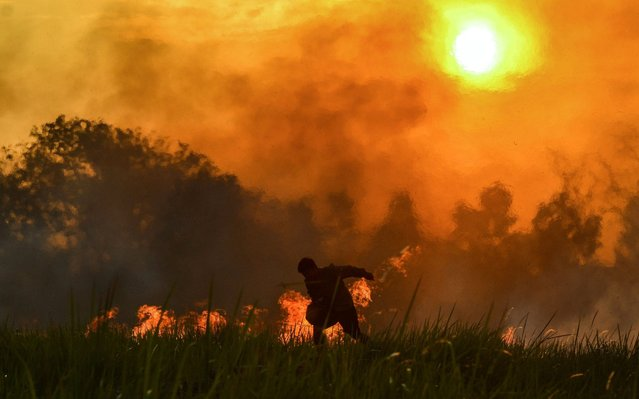 A Forest and land fire task force officer tries to douse a fire at a palm oil plantation in Pekanbaru, in Riau province, Indonesia on July 20, 2019. (Photo by Wahyudi/AFP Photo)