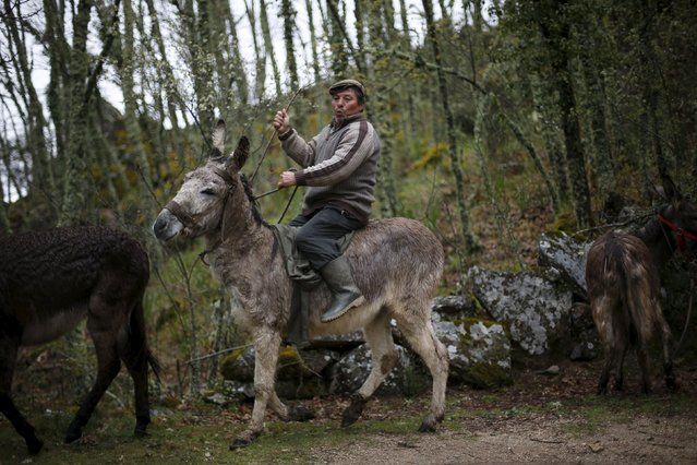 Antonio Fontes rides a donkey near Agracoes, near Chaves, Portugal April 19, 2016. (Photo by Rafael Marchante/Reuters)