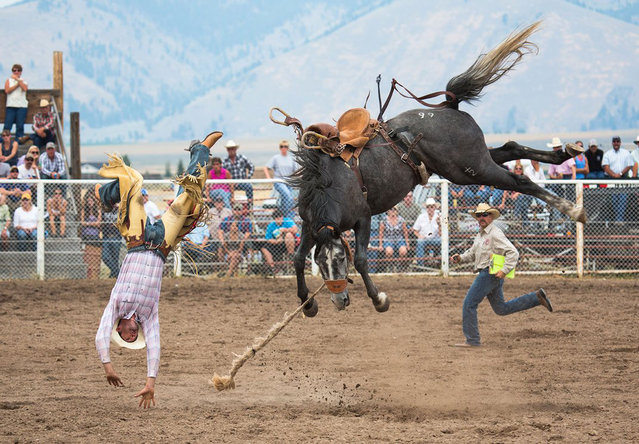 A champion bronco bucks a champion rider at the Helmville Rodeo in Montana. (Photo by Carol Lynne Fowler/Smithsonian.com)