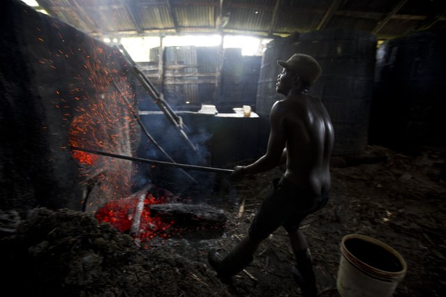 In this June 16, 2017 photo, Batel Delciner, 23, removes wood from a furnace to lower the heat cooking sugar juice at the Ti Jean distillery, which produces clairin, a sugar-based alcoholic drink, in Leogane, Haiti. The broth is cooked for about four hours after a fermentation period of four to eight days. (Photo by Dieu Nalio Chery/AP Photo)