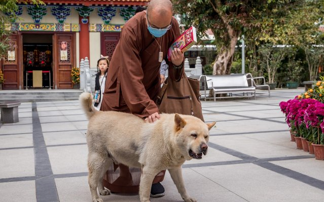 A Buddhist monk wearing a protective mask pats a dog at the Po Lin Monastery in Hong Kong, China on February 4, 2020. (Photo by Paul Yeung/Bloomberg)