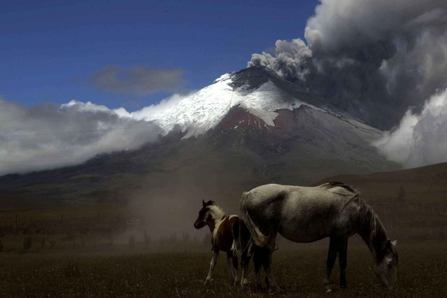 The Cotopaxi volcano spews ash and vapor, as seen from El Pedregal, Ecuador, Thursday, September 3, 2015. Cotopaxi began showing renewed activity in April and its last major eruption was in 1877. (Photo by Dolores Ochoa/AP Photo)