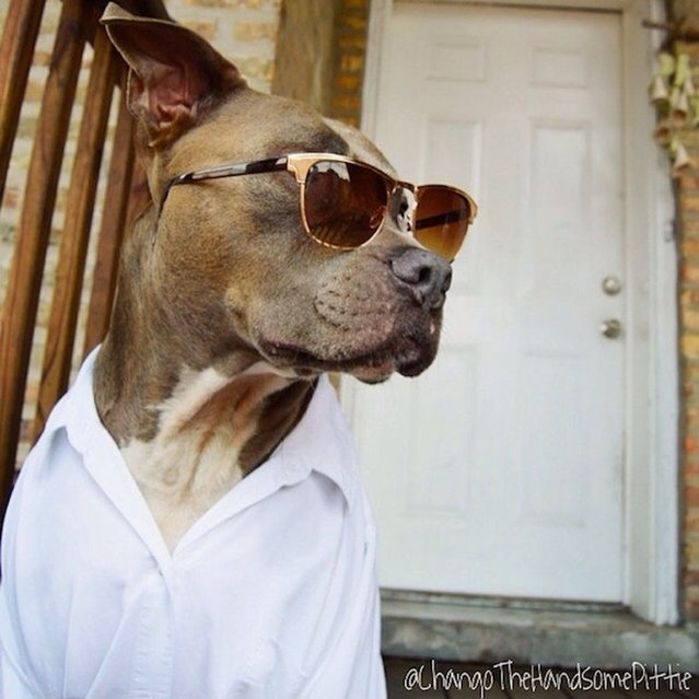 Most Handsome Dogs On The Internet