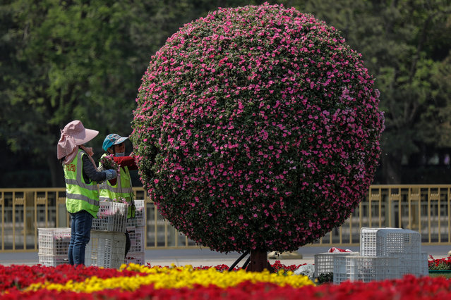 Chinese migrant workers build flowerbeds that will be used to celebrate the upcoming Labor Day at the Tiananmen Square in Beijing, China, 28 April 2020. The upcoming Chinese Labor Day holidays will take place 01 to 05 May. (Photo by Wu Hong/EPA/EFE)