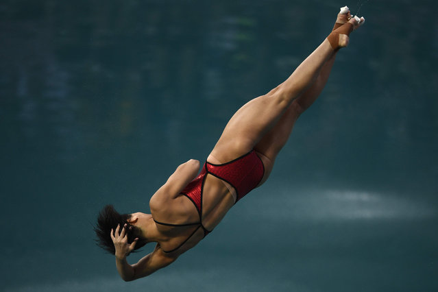 China's Shi Tingmao competes in the Women's 3m Springboard Final during the diving event at the Rio 2016 Olympic Games at the Maria Lenk Aquatics Stadium in Rio de Janeiro on August 14, 2016. (Photo by Martin Bureau/AFP Photo)