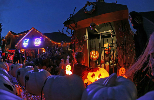 A visitor to a house covered in Halloween decorations looks over the scene in the front yard in the Chicago suburb of Naperville, Illinois, October 27, 2014. Breathtaking purple-and-orange light displays, zombie graveyards, mutilated mannequins and singing inflatable pumpkins are just some of the front-yard Halloween decorations that Americans are expected to spend $7.4 billion on this year. (Photo by Jim Young/Reuters)