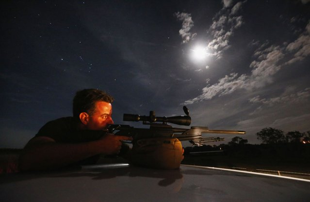 Kangaroo shooter Steven O'Donnell rests his .223 calibre rifle on the roof of his truck as he aims at a group of kangaroos on a property located on the outskirts of Australia's capital city Canberra March 23, 2013. O'Donnell, a professional plumber, shoots kangaroos on local farmer's properties around three times a week as part of the annual cull, running from March until the end of July, which involves the legal shooting and tagging of thousands of eastern grey kangaroos per year in the Australian Capital Territory. Picture taken March 23, 2013. (Photo by David Gray/Reuters)