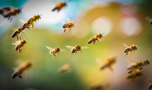 Close-ups of Nature, finalist. A Swarm of Bees by Sebastian Škoić, taken in Ljubljana, Slovenia. (Photo by Sebastian Škoić/REDISCOVER Nature/EEA)