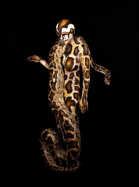 """""""Python"""". (Photo by Johannes Stötter)"""