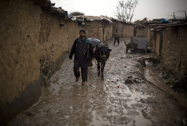 A Pakistani man, displaced from a Pakistani tribal area due to fighting between security forces and militants, walks in the rain with his cow, in suburbs of Islamabad, Pakistan, Tuesday, February 24, 2015. (Photo by B. K. Bangash/AP Photo)
