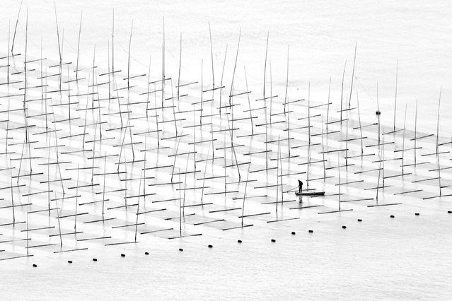Tugo Cheng, China. Shortlisted, Open Competition, Travel. A fisherman is farming the sea in between the bamboo rods constructed for aquaculture off the coast in southern China. (Photo by Tugo Cheng/Sony World Photography Awards)