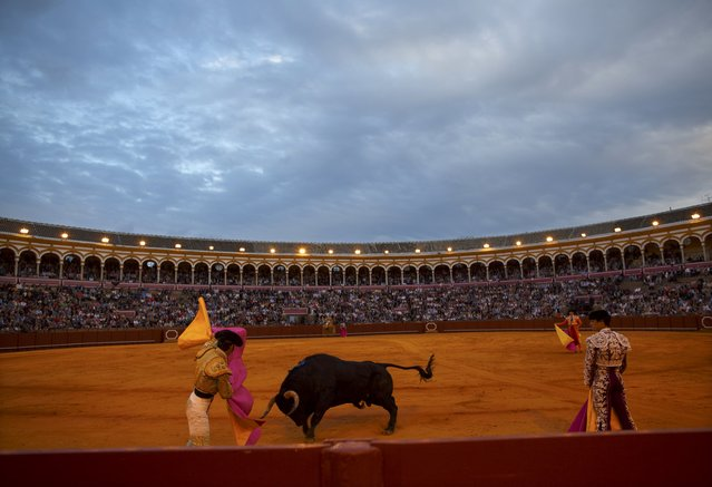 Spanish matador Juan Jose Padilla (L) performs a pass to a bull during a bullfight at The Maestranza bullring in the Andalusian capital of Seville, southern Spain April 25, 2015. (Photo by Marcelo del Pozo/Reuters)