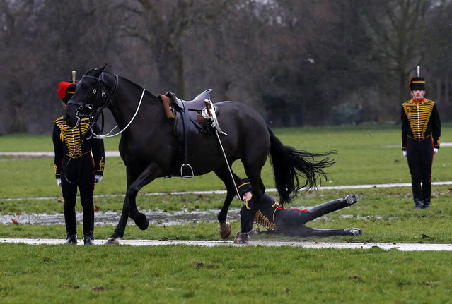 A rider falls off a horse during the King's Troop Royal Horse Artillery 41 Royal gun salute to mark the accession of Britain's Queen Elizabeth to the throne in 1952, at Hyde Park in central London February 6, 2014. (Photo by Olivia Harris/Reuters)