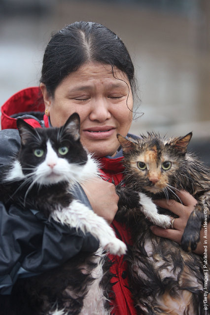 Maria Steele fights back tears after she and her cats Ching (L) and Sushi (R) were rescued from their flooded home June 12, 2008 in Cedar Rapids, Iowa