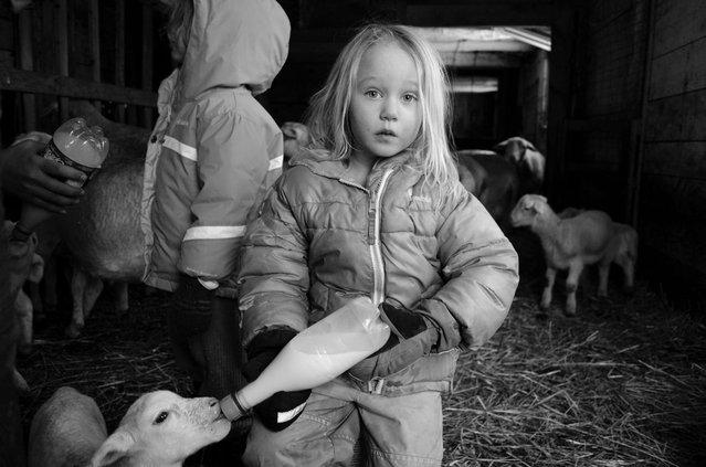 Feeding time on Hettie Belle Farm in Warwick, Massachusetts. (Photo by Abigail Friel/Smithsonian.com)