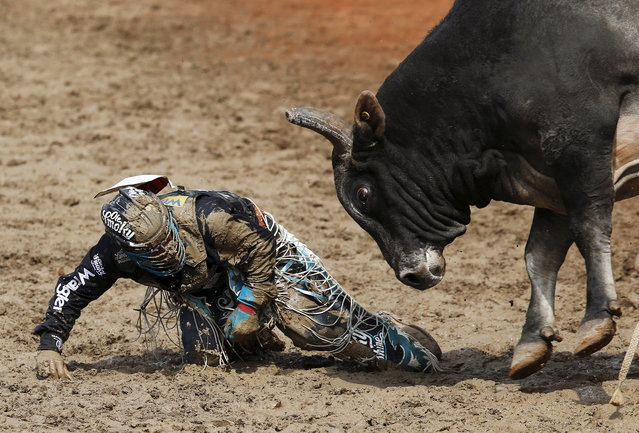 The bull Smoke Show goes after Mike Lee of Fort Worth, Texas after he got bucked off in the Bull Riding event during Championship Sunday at the finals of the Calgary Stampede rodeo in Calgary, Alberta, July 12, 2015. (Photo by Todd Korol/Reuters)