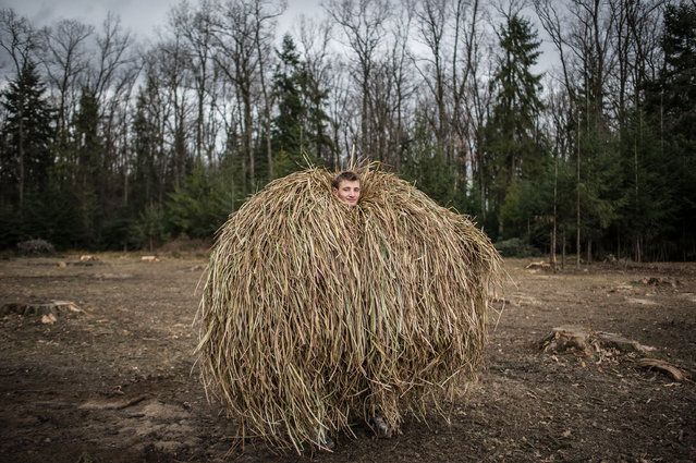"""A Malanka bear"". A young man poses for a portrait in a costume of a bear made of hay a couple of days before the traditional holiday of Malanka in the Ukrainian village of Krasnoilsk, Chernivtsi region, Ukraine. Malanka is a wild holiday that is marked on the eve of January 14, New Year according to the Julian calendar. Photo location: Krasnoilsk, Chernivtsi region, Ukraine. (Photo and caption by Alex Furman/National Geographic Photo Contest)"
