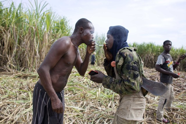 In this June 17, 2017 photo, Ronald Sincere, 20, right, lights his cigarette from that of Medez Cazeau, 42, as they take a break from cutting sugar cane on the Aubry farm in a rural area of Leogane, Haiti. The men migrated from Petit Goave to work year-round on this farm, about 45 minutes away by car, earning 800 gourdes, or about $12.50 dollars for each truck they fill with cane. The men said they manage to fill one truck in two days, which is used to make clairin, a sugar-based alcoholic drink. (Photo by Dieu Nalio Chery/AP Photo)