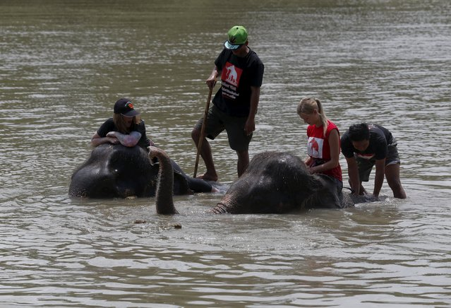Mahouts and volunteers bathe their elephants in the Pasak river in the ancient Thai capital Ayutthaya, north of Bangkok, Thailand, August 11, 2015. (Photo by Chaiwat Subprasom/Reuters)