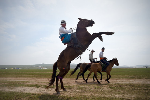 A Mongolian man controls his horse during the Mongolian summer festival known as Naadam on the outskirts of Ulan Bator on July 13, 2016. (Photo by Wang Zhao/AFP Photo)