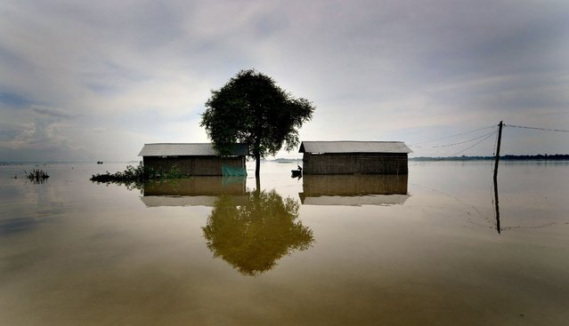 Picture made available on 18 August 2014 showing a man inspecting his submerged dwellings in the flood affected Morigaon district of Assam state, India,17 August 2014. (Photo by EPA/STR)