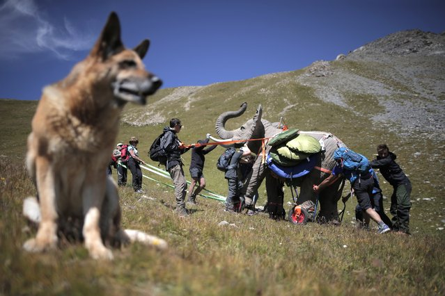 "Volunteers use ropes to push an elephant, a 200kg-replica of one of Hannibal's elephant, by French artist Luc Dubost, on the Cavalla Pass, in the Maira Valley, near Cuneo and the French border, on August 21, 2014, as part of an artistic project called ""Not for highway use"". (Photo by Marco Bertorello/AFP Photo)"