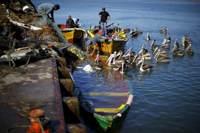 Fishermen remove a net from their sunken boat after an earthquake hit areas of central Chile, in Coquimbo city, north of Santiago, Chile, September 17, 2015. (Photo by Ivan Alvarado/Reuters)