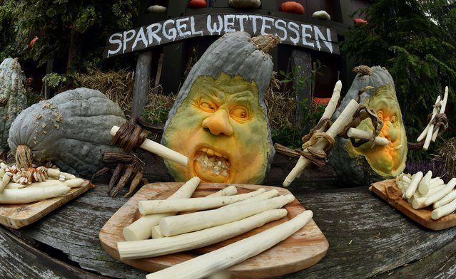 "An ""asparagus eating contest"" made of asparagus and carved pumpkins is on display on the sidelines of the Giant Vegetable Competition in Klaistow, northeastern Germany, on September 20, 2015. The vegetable giants compete in seven categories. (Photo by Bernd Settnik/AFP Photo)"