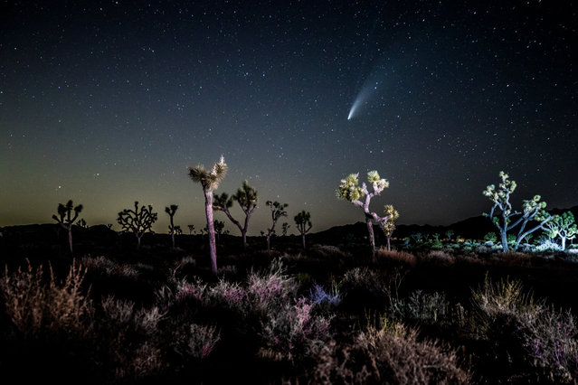 "Comet NEOWISE, also known as ""C/2020 F3"", is seen on July 19, 2020 in Joshua Tree, California. The comet is currently visible after sunset in the Northern Hemisphere and will have its closest encounter with Earth on July 23 when it will be around 64 million miles away. (Photo by Rich Fury/Getty Images)"