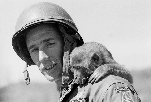 Army Master Sgt. Douglas Davis of Santa Rita, N.M., finds his shoulders are a rest stop for his pet monkey, Tiger, at Tancanh, in South Vietnam's central highlands, December 30, 1962. Davis is assigned at Tancanh as a member of a U.S. Special Forces team training Montagnard mountain tribesmen to defend themselves against Communist Viet Cong. (Photo by Horst Faas/AP Photo)