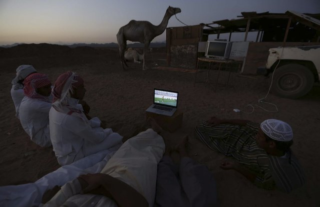 Men watch the 2014 World Cup Group B soccer match between the Netherlands and Australia on a laptop, at a camel market in Daba near Tabuk, in this June 18, 2014 file photo. (Photo by Mohamed Alhwaity/Reuters)