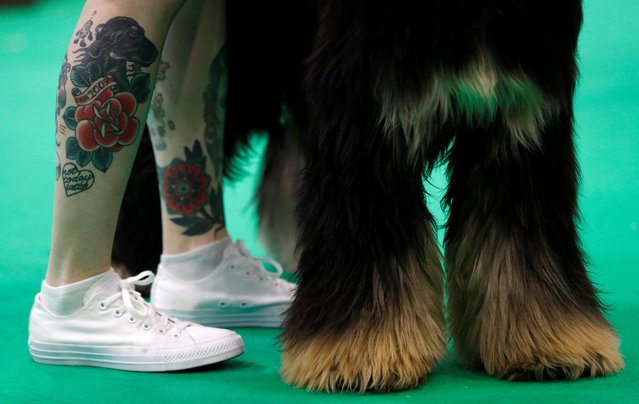 A handler shows an Afghan hound during the Crufts Dog Show in Birmingham, Britain March 9, 2018. (Photo by Darren Staples/Reuters)