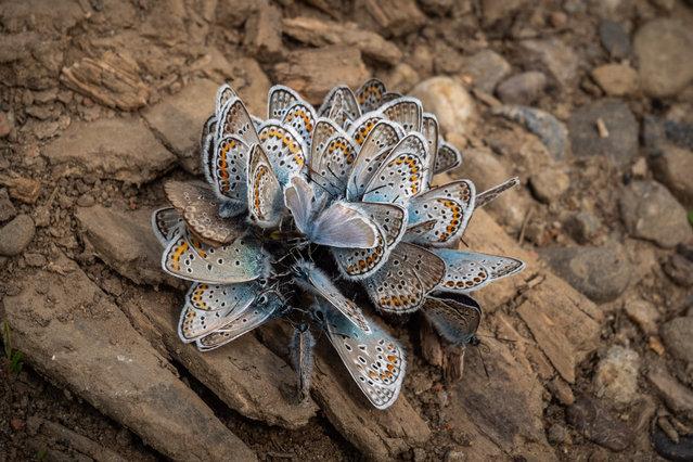 Nature on My Doorstep, winner. Butterflyflower by Jaroslav Vyhnička, taken in Dubnica nad Váhom, Slovakia. (Photo by Jaroslav Vyhnička/REDISCOVER Nature/EEA)