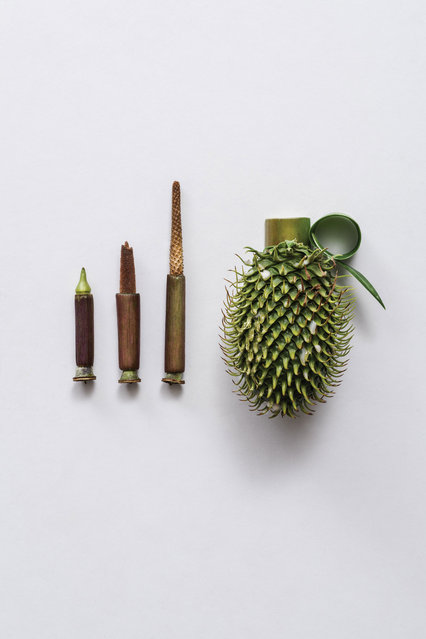 Harmless Weapons By Sonia Rentsch