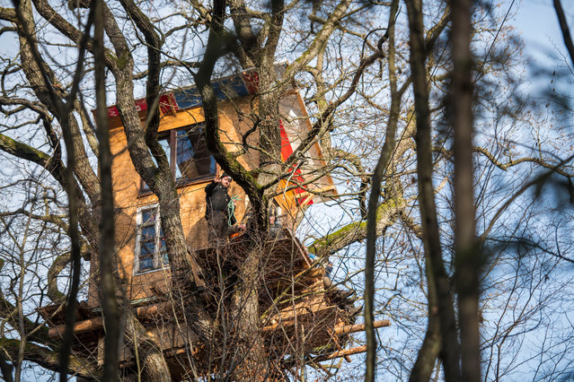 An activist stants in front of his treehouse while police are clearing tree houses of the last activists who protested against deforestation and the continued construction of the A49 highway in the Dannenroder forest on December 04, 2020 at Dannenrod near Homberg, Germany. Activists in the forest have attempted to defend their positions in an elaborate network of treehouses during clashing with police for the last several weeks. Large sections of the forest are to make way for the A49 extension. (Photo by Thomas Lohnes/Getty Images)