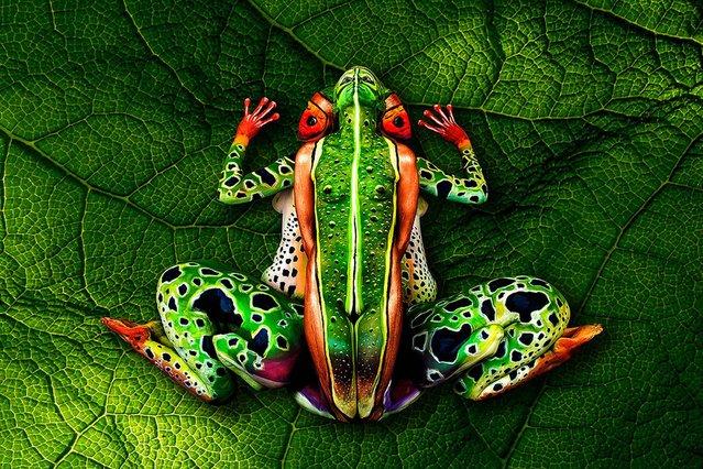 """Frog"". (Photo by Johannes Stötter)"