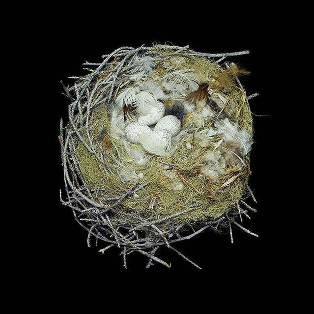 Bird Nest By Sharon Beals