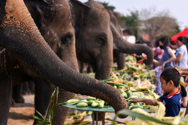 A child feeds an elephant during Thailand's National Elephant Day celebration in the ancient city of Ayutthaya, Thailand, March 13, 2021. (Photo by Chalinee Thirasupa/Reuters)