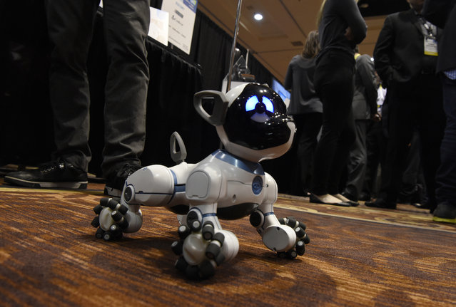 The WowWee CHiP robot dog is seen at the 2016 Consumer Electronics Show (CES) in Las Vegas, Nevada, U.S., on Monday, January 4, 2016. CES is expected to bring a range of announcements from major names in tech showcasing new developments in virtual reality, self-driving cars, drones, wearables, and the Internet of Things. (Photo by David Paul Morris/Bloomberg)