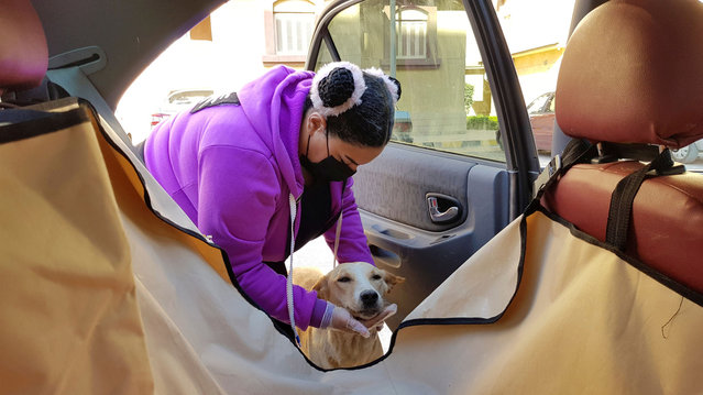 """Hebatallah Adel, a member of """"Aleefcom paxi for pets transport"""", picks up a dog to a car in Cairo, Egypt, March 17, 2021. (Photo by Sayed Sheasha/Reuters)"""