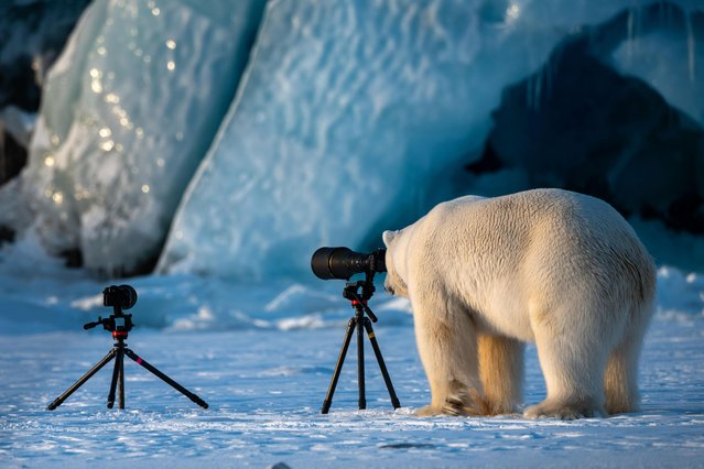 How would you like it if I spent all day taking photos of you, huh? (Photo by Roie Galitz/Barcroft Images/Comedy Wildlife Photography Awards)