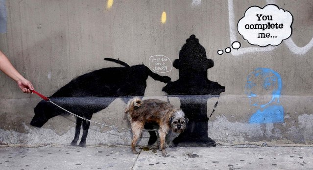 A dog urinates on a new work by British graffiti artist Banksy on West 24th street in New York City, on October 3, 2013. Three new works by the street graffiti artist have appeared in New York City this week after Banksy announced a month-long residency in New York. (Photo by Mike Segar/Reuters)