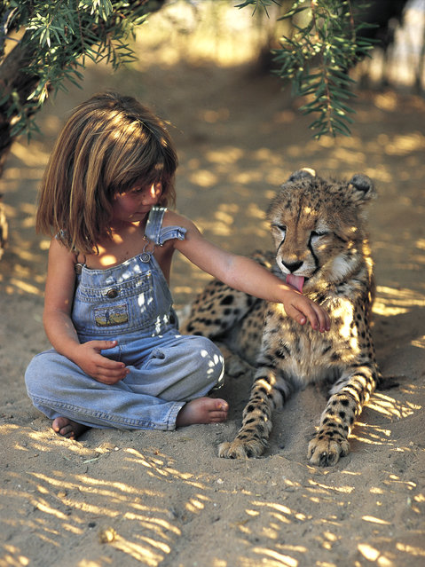 Tippi aged 6 sitting cross legged with a young cheetah in Namibia, 1996. (Photo by Sylvie Robert/Barcroft Media)
