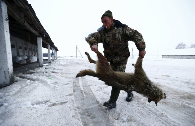 A hunter carries a wolf killed in a field near the village of Khrapkov, Belarus, January 27, 2016. (Photo by Vasily Fedosenko /Reuters)