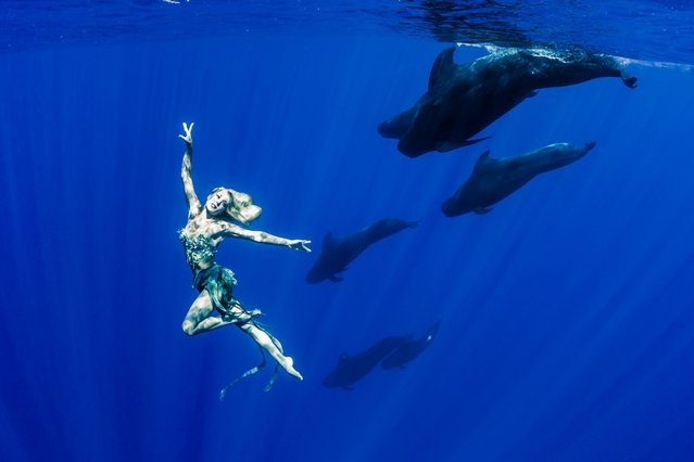 """A stunning underwater shot showing model Hannah Fraser being photographed next to a group of pilot whales"". (Photo by Shawn Heinrichs/Barcroft Media)"